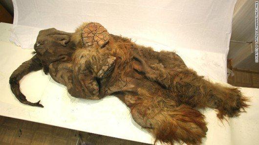 woolly-mammoth.jpg